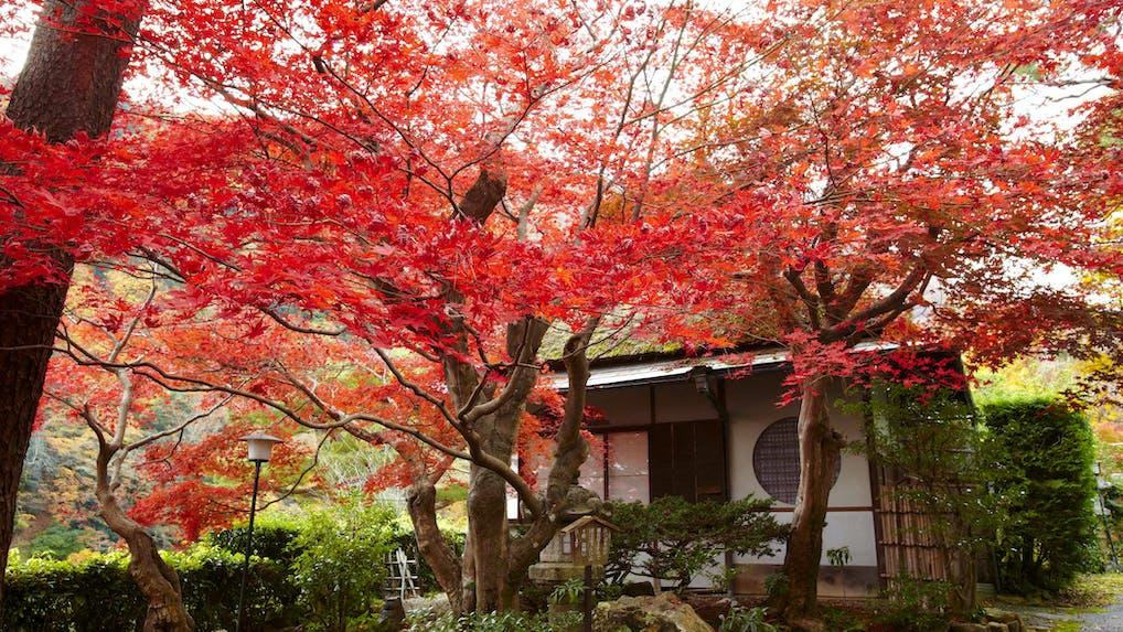 秋の京都で名旅館に泊まる 一度は泊まりたい憧れの宿6選