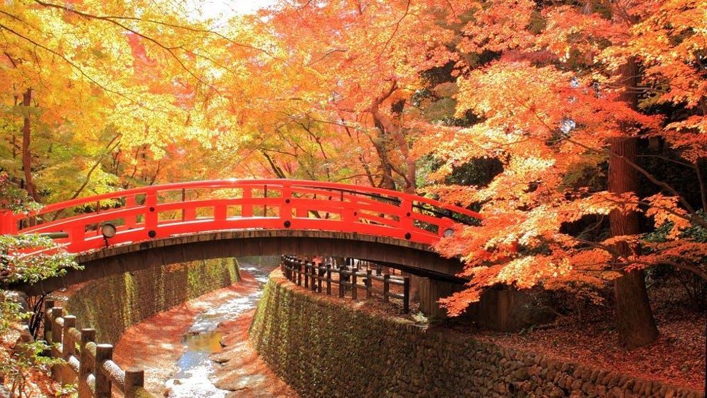 秋の絶景 紅葉を京都で愉しむお...