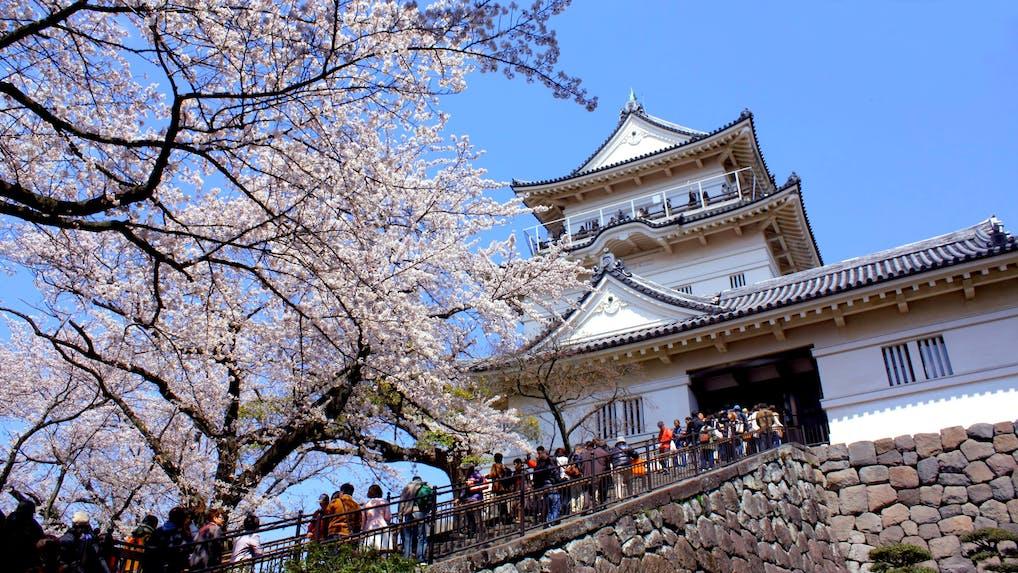 お城×桜の絶景を楽しむお花見旅行へ