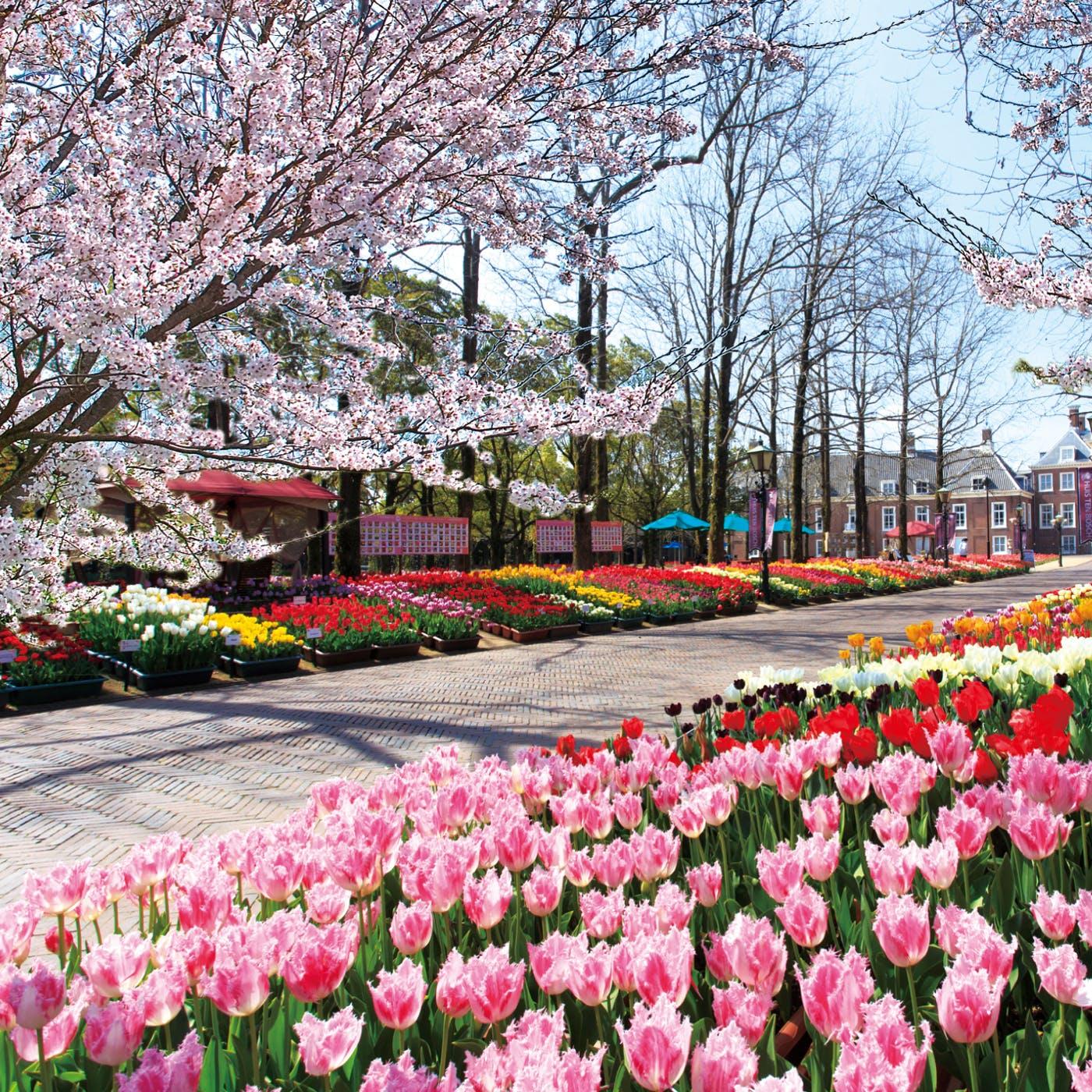 桜とチューリップで感じる春の訪れ