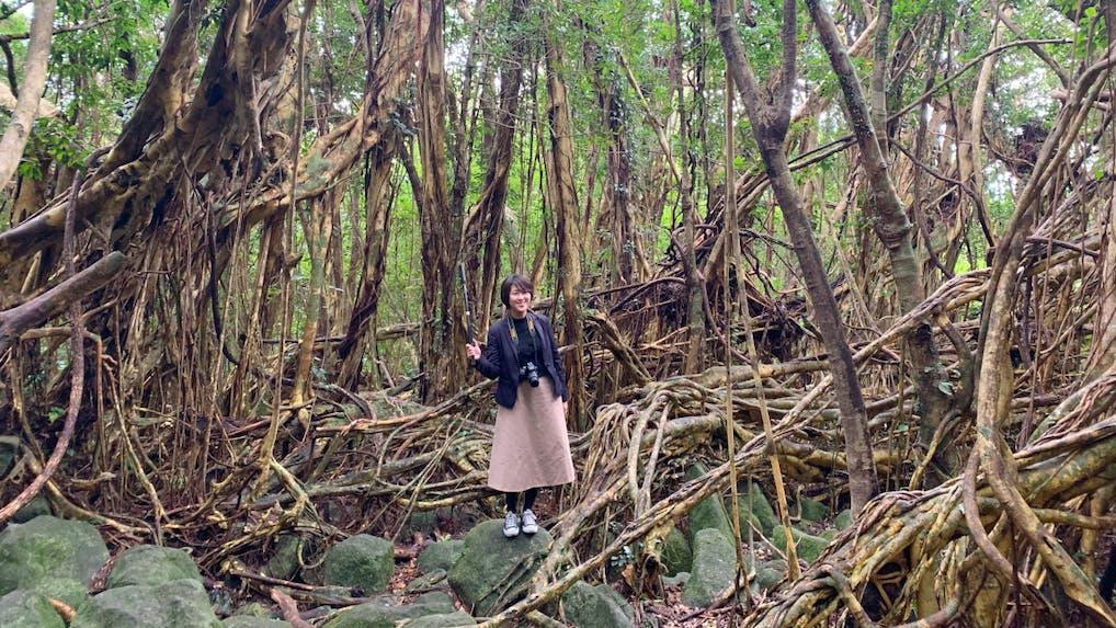 【コラム】世界自然遺産「屋久島」を巡る旅