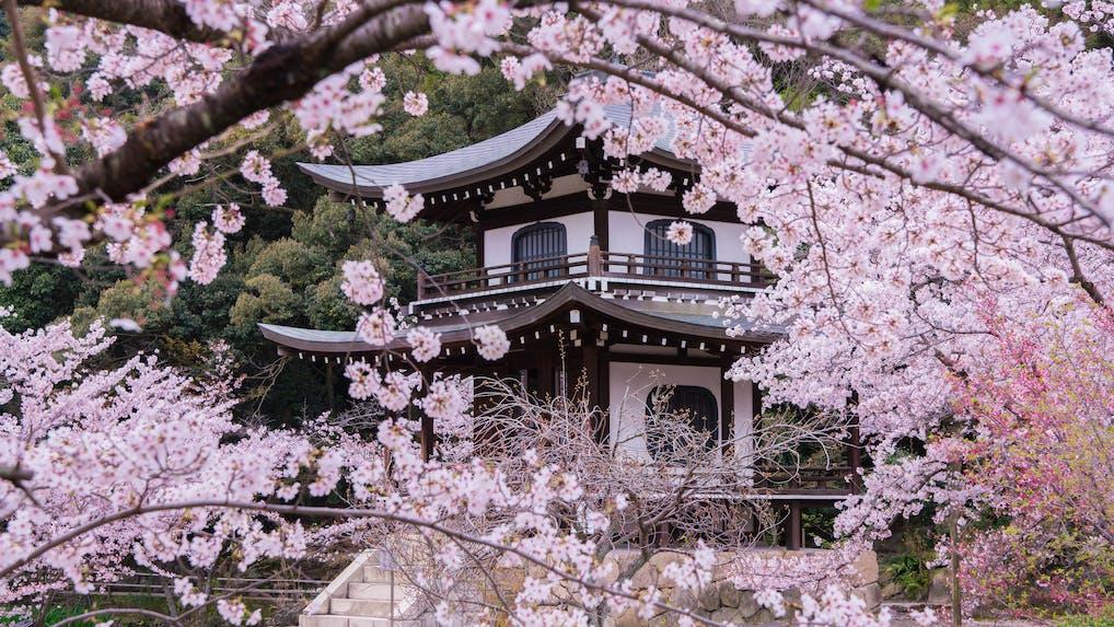 京都観光のプロに聞いた!とっておきの京都 穴場観光スポット 春編