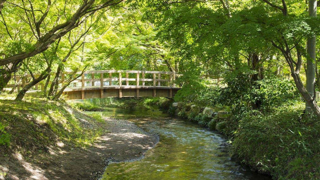 「亀の井別荘」「由布院 玉の湯」がお薦めする、夏の由布院の過ごし方