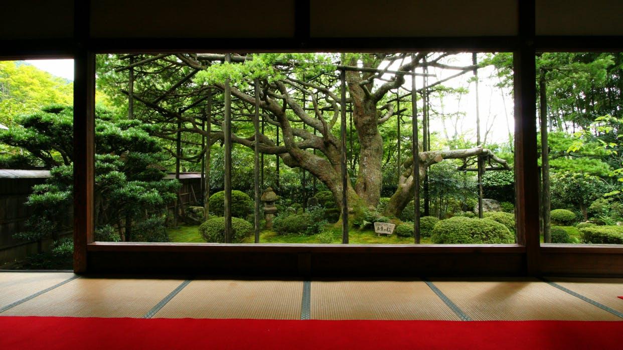 京都観光のプロに聞いた!とっておきの京都 穴場観光スポット 夏編