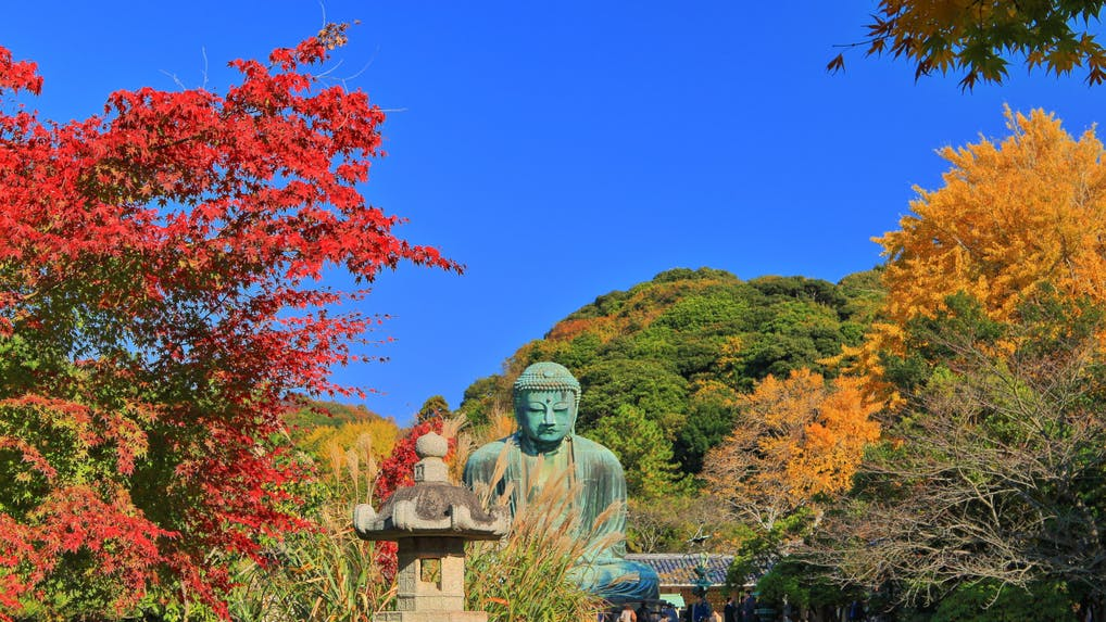 「秋に鎌倉観光するならどこがいい?」プロ中のプロに聞いてみた