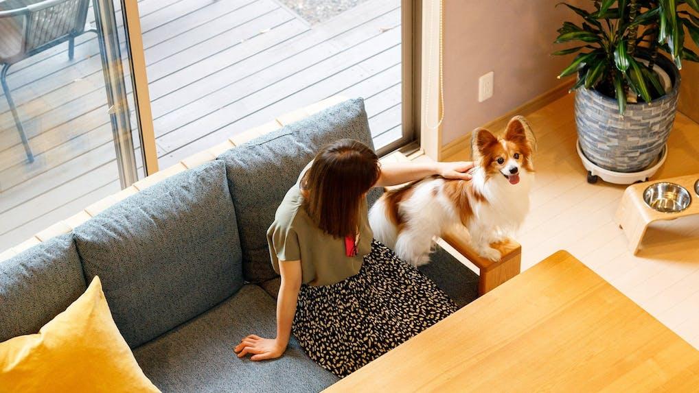【2021年版】軽井沢の一棟貸切でペットと楽しむ!愛犬と泊まれるバケーションレンタル5選